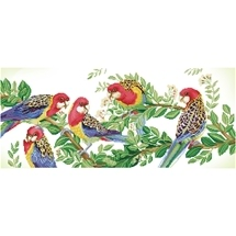 Eastern Rosella Gathering
