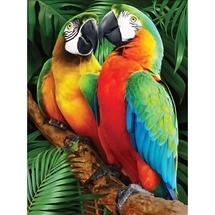 Macaws Diamond Painting